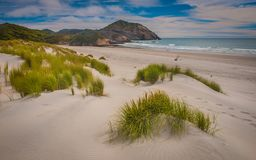Dune vegetation on Wharariki Beach South Island New Zealand Royalty Free Stock Photo