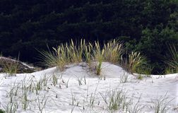 Dune from white sand with marram grass Stock Images
