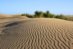 Dune with wonderful texture Stock Photos