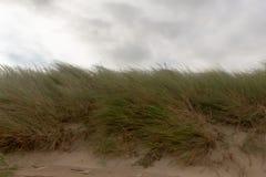 Dune 1 zeta aan di Egmond, Paesi Bassi fotografie stock libere da diritti