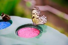 DUNEDIN, NIEUW ZEELAND - FEBR 10, 2015: vlinders die van een plaat met roze en blauwe plastic gaszuiveraars eten Stock Fotografie