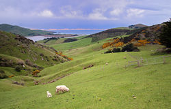 Dunedin Peninsular Royalty Free Stock Photography