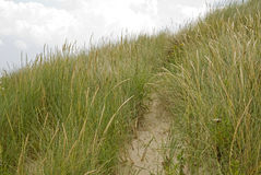 Dunegrass Royalty Free Stock Photo