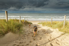 Dunelandscape with dogs Royalty Free Stock Photography