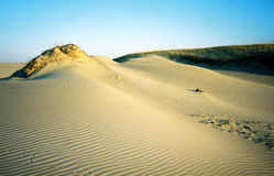 Dunes. Moving dunes Royalty Free Stock Photography