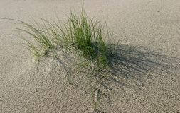 Dunes. Grass on dunes at beachside Stock Image