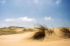 Dunes. Located close to Nida, Lithuania Royalty Free Stock Image