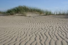 Dunes. In Lithuania royalty free stock images