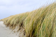 Dunes. Dutch dune grass royalty free stock images