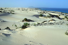 Dunes. Sand, hills of sand, poor vegetation, sea, coast, sky, see view, lanscape, north, Fertaventura, Canary islands, Atlantic, Spain royalty free stock photo