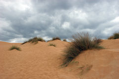 Dunes. Sand dunes of the seas of the Sardinia Stock Images