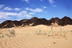 Dunes Stock Photos