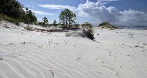 The dunes on Amelia Island, Florida, USA royalty free stock image