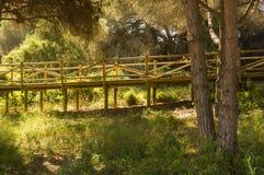 Dunes of artola natural reserve located in Cabopino Marbella Costa del Sol Malaga Spain stock image