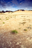 Dunes avec l'herbe dans le sable. Photo libre de droits