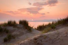 Dunes avec l'herbe de gourbet Photos libres de droits