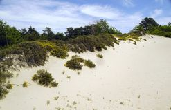 Dunes in Beach Area Royalty Free Stock Photography