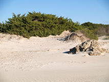 Dunes in beach area Stock Images