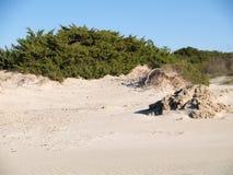 Dunes in beach area Stock Images