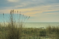 Dunes with beach grass at the coast of Baltic Sea Stock Photography
