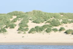 Dunes. With beach grass covered dunes viewed from the sea stock image