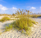 Dunes with beach grass Royalty Free Stock Photography