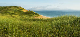 Dunes and Beach Grass. Royalty Free Stock Photos
