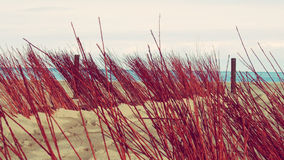 Dunes Beach Holiday Tropical Landscape. Beach Scene with sand dunes vegetation paradise Royalty Free Stock Photos