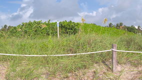Dunes on the beach stock video