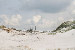 Dunes on a beach in Leba, Poland Royalty Free Stock Images