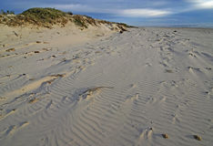 Dunes and Beach of Padre Island Stock Photo
