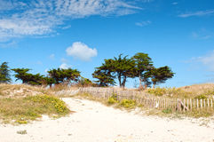 Dunes in the beach on Quiberon, France Stock Photography