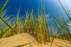 Dunes at Belgian north sea coast against cirrus and stratus clouds and reed grass. Near De Haan, Belgium royalty free stock photos