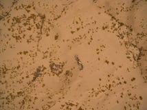 Dunes. Of Bilbao located in Coahuila, Mexico Stock Photography