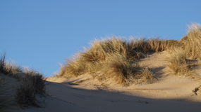 Dunes at Bloemendaal. Beach (Noord- Holland Stock Photography