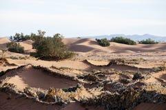 Dunes chez Mhamid Images libres de droits