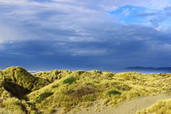 Dunes on a cloudy day. European beach grass (Ammophila arenaria) covering a dune on a cloudy day Stock Photo