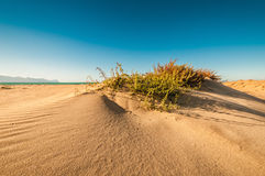 Dunes at coast of Sicily Royalty Free Stock Images
