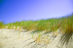 Dunes conceptual image. Dunes and grass with clean blue sky Royalty Free Stock Image
