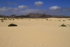 Dunes of Corralejo, Fuerteventura Royalty Free Stock Photo