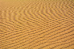 Dunes of Corralejo, Fuerteventura, Canary Islands, Spain. Close-up. Stock Photo