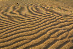 Dunes of Corralejo, Fuerteventura, Canary Islands, Spain. Close-up. Royalty Free Stock Photos