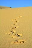 Dunes of Corralejo, Fuerteventura, Canary Islands, Spain. Royalty Free Stock Photo