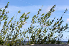 Dunes covered with bushy plants Royalty Free Stock Photos
