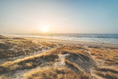 Dunes at the danish coast in the evening light royalty free stock photos