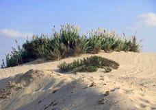 Dunes dans Nizzanim, Israël Photos libres de droits