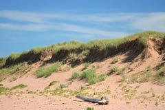 Dunes de bois de flottage et de sable Photographie stock