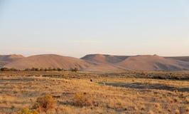 Dunes de Bruneau, Idaho, Etats-Unis Photo libre de droits