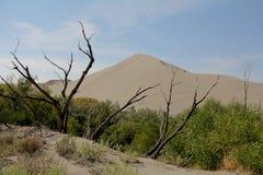 Dunes de Bruneau, Idaho, Etats-Unis Image stock
