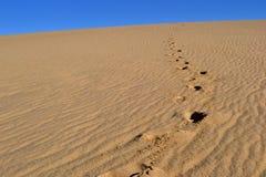 Dunes de Cabo Polonio Photos libres de droits